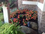 Flowers on the edge of your patio