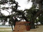 Tree House for the kids