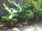 Private gardens with banana trees surrounding the villa.