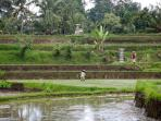 The incredible utilisation of land for rice paddies as seen on a stroll near the villa