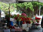 Hilo Farmer's Market. We're about 30 minutes from downtown Hilo.