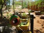 Dinah Veeris garden