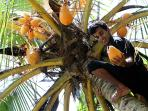 Templeberg Villa Coconut Plantation offers freshly plucked coconuts by Sudu