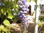 Spring at La  Casa degli Amori