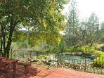 Pond at Owl Lodge
