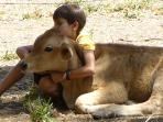 Get up close and personal with the new babies on the farm--water buffalo, sheep and  our newest calf