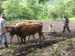 Come get your hands dirty with organic, traditional agriculture