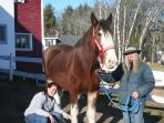Lucy our Clydesdale- 1 of 18 horses to love!! Discount at our stables on 70 scenic acres
