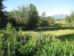 The verdant garden