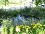 Beautiful and natural front yard pond