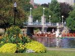 Boston Public Garden In full Bloom