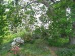 A mix of cottage and native garden