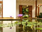 Interior Pond