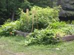 Organic fruit and vege garden