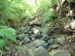 creek on property