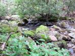 Pisgah Creek - great water-hiking