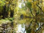Burney Creek in the fall