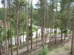 Wooded Views from Condo