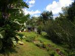 Our lush garden