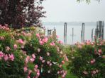 Waterfront Rose Garden