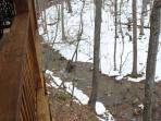 Seasonal stream in backyard - watch from two decks
