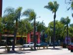 Palm trees along Santa Monica Blvd--3 min walk!