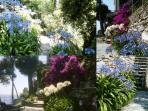 garden summer colors