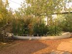 Ecological fishpond in vintage canoe