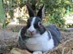 my rabbit Susanna