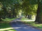 600meter oak line drive way