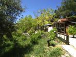 out side vine yard
