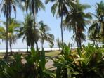 Beach Lined With Palm Trees......