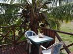 White Coconut Studio - The Patio & The Coconut Palm