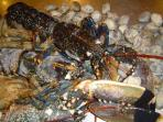 marisco de la costa gallega