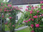 Roses at the entrance to Pear Tree Cottages
