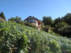 The house in the vineyards