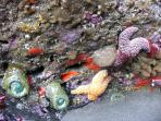 tidepooling and beachcombing
