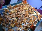 mushroom season in the fall