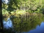 Natural pond wher you can relax, watch dragonflies, and many birds line red wing black bird