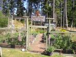 Vegetable garden for all year around gardening...