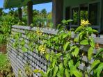 Tropical vines on front trellis