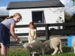 Guests feeding lambs