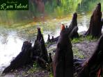 cypress knees at river edge