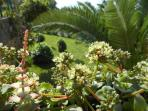 Macro on our garden