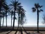 palms on the beach Santa Margarida