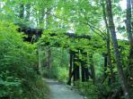 Shoreline trail scenery