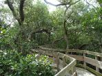Explore Florida Nature in Coquina Bay Walk