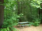 Picnic table under the tree canopy