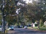 Tree-lined street -  all custom homes