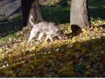 seaking truffles